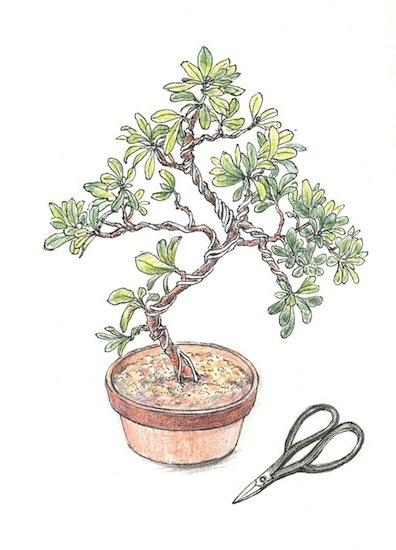 小さいさつき盆栽(講習会ポスター用)