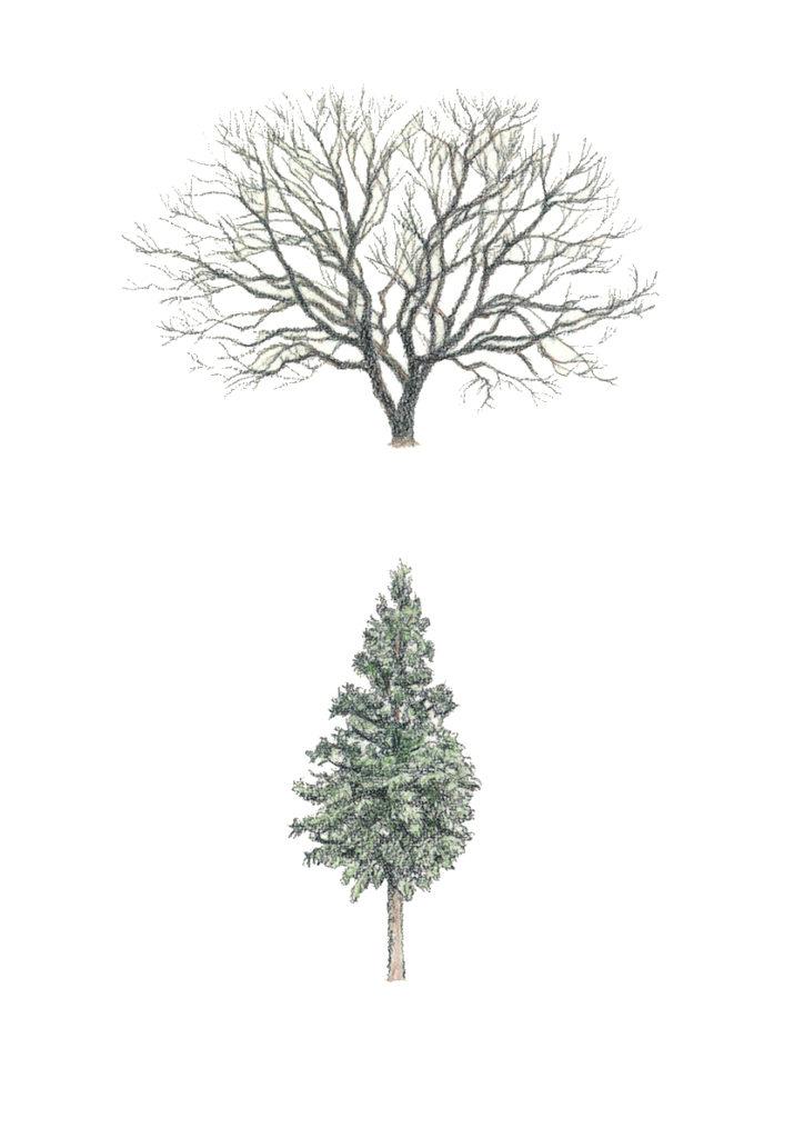 常緑樹 落葉樹 神代植物公園