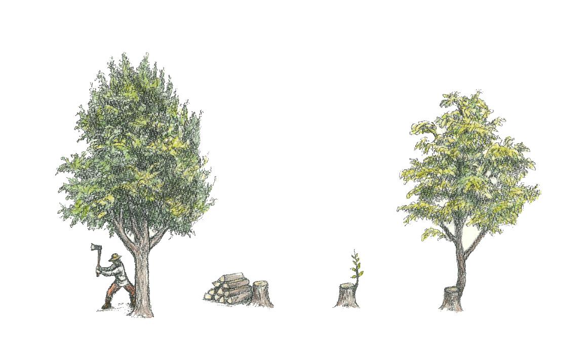 雑木林 更新作業 神代植物公園