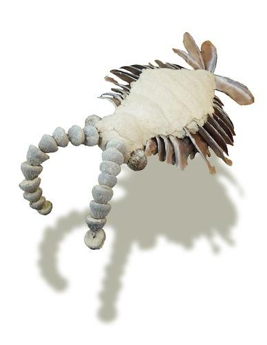粘土と木の実のアノマロカリス ガラスケース内展示物
