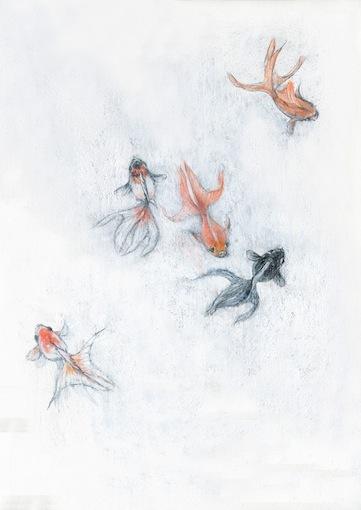 金魚 (オリジナル作品)