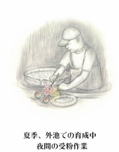 温室の仕事(リーフレット原画)