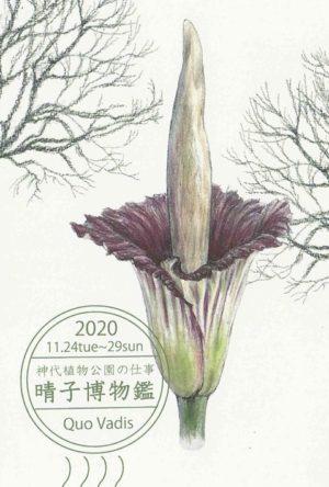 晴子博物鑑 個展『神代植物公園の仕事』